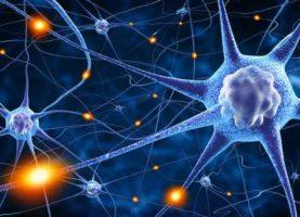 Fotolia_78707112_Una-spugna-per-coltivare-neuroni-levoluzione-dei-neuroni-in-vitro-dal-2D-al-3D-3-680x365